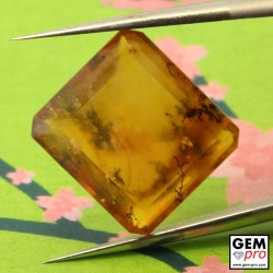 Orange Dendritic Moss Opal 8.53 ct Octagon from Madagascar Gemstone