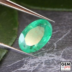 0.35 Carat Green Emerald Gem from Zambia