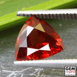Red Almandine Garnet 2.21 Carat Trillion from Madagascar Gemstones