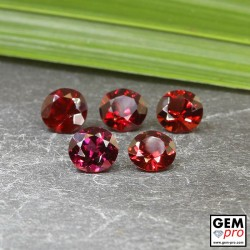 Red Almandine Garnet 4.92 Carat (5 pcs) Round from Madagascar Gemstones