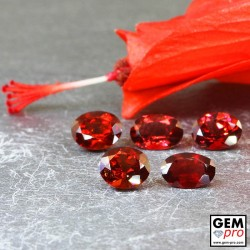 Red Almandine Garnet 6.97 Carat (5 pcs) Oval from Madagascar Gemstones