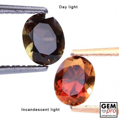 0.95 Carat Grenat Change Couleur Ovale 6.4 x 5.1 mm Gemme de Madagascar