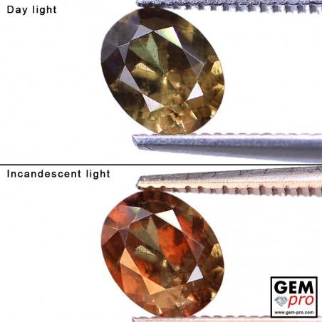 1.11 Carat Grenat Change Couleur Ovale 7.0x5.5 mm Gemme de Madagascar