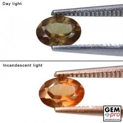 0.91 Carat Grenat Change Couleur Ovale 6.7x4.9 mm Gemme de Madagascar
