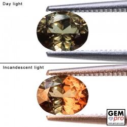 1.03 Carat Grenat Change Couleur Ovale 7.0 x 5.5 mm Gemme de Madagascar