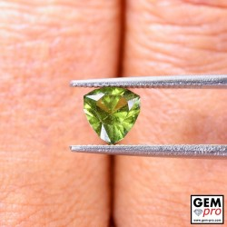 1.13 ct Yellowish Green Kornerupine Gem from Madagascar Natural and Untreated 1.1 CT