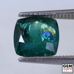 Green Apatite 2.49 Carat Cushion Cut Madagascar Gemstone