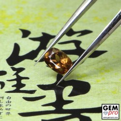 0.40ct Brown Sapphire Cushion Cut 5 x 3 mm Natural Gemstone from Madagascar