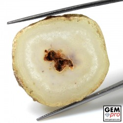 38.33 ct White Solar Quartz Agatized Stalactite Quartz Slice Gemstone from Madagascar Natural and Untreated